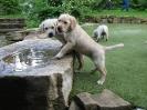 puppies_15