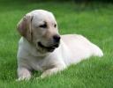 puppies_2